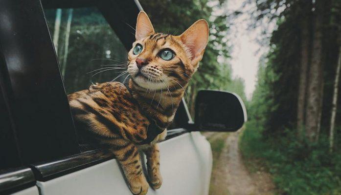 Chuyển thú cưng như thế nào khi chuyển nhà