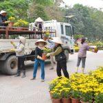 Vận chuyển cây cảnh như thế nào để đảm bảo an toàn