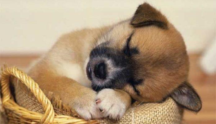 Mẹo hay bảo vệ và chăm sóc thú cưng ngày chuyển nhà