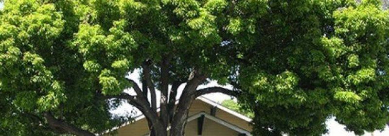 4 điều kiêng kỵ nhất định phải nhớ khi trồng cây trang trí nhà ở